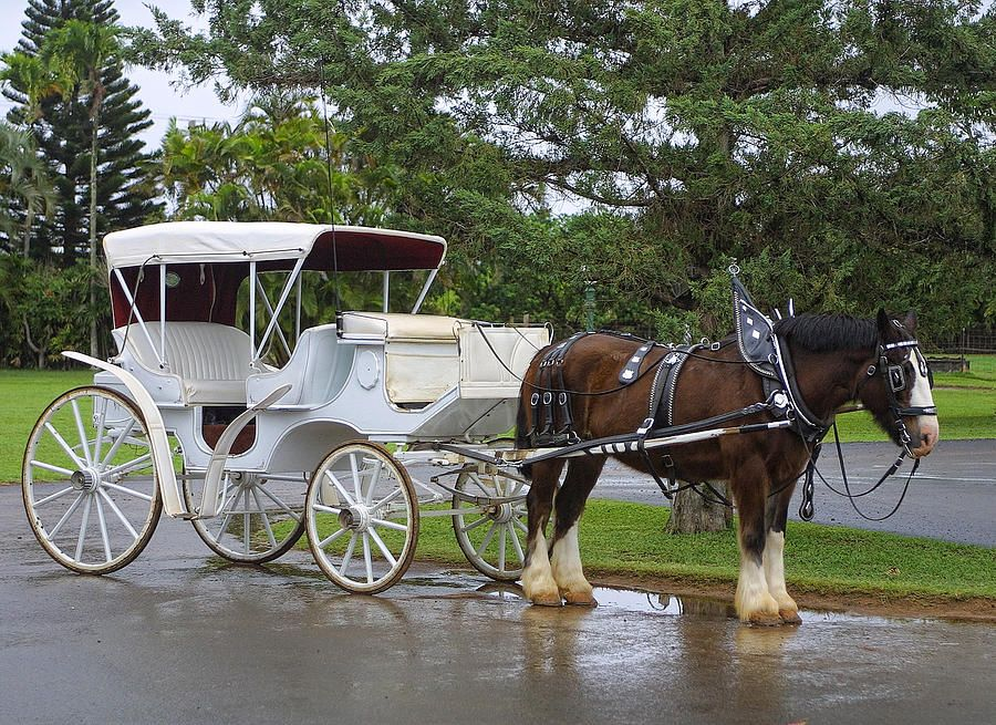 love-goes-together-like-a-horse-and-carriage-linda-phelps.jpg
