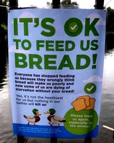 Feeding ducks sign.jpg