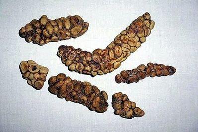 Coffee bean nuggets