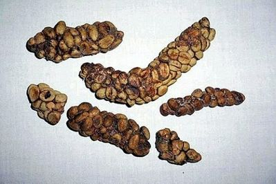 coffee-bean art.jpg