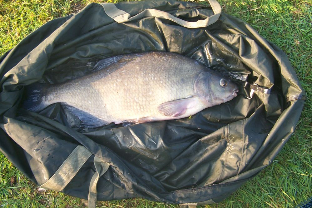 Large Bream.JPG