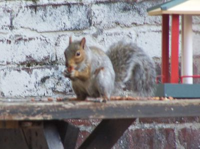 The Peanut Thief